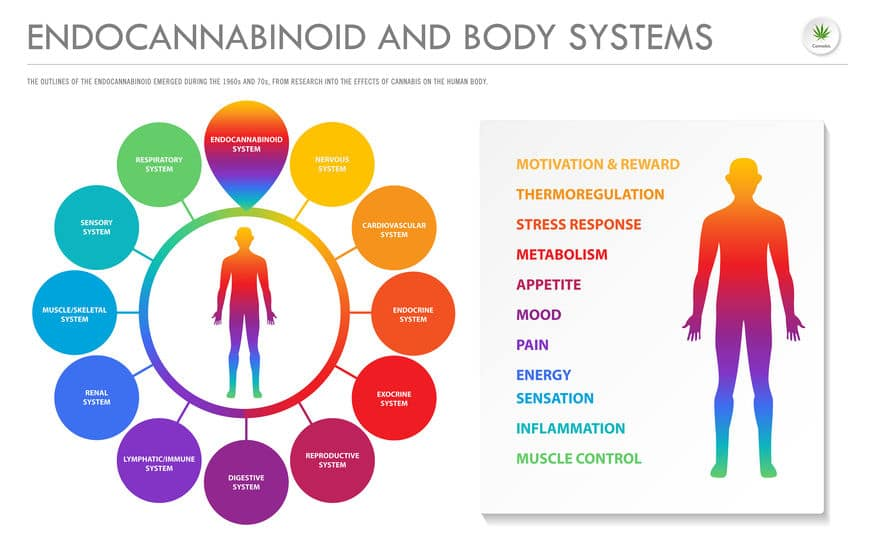 CBD is an All-Day Supplement